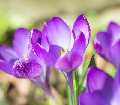 Wiosna w SPA