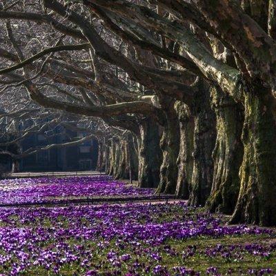 park-kwiaty.jpg