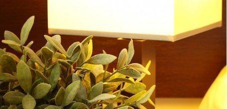 magnolia/P7080191.jpg