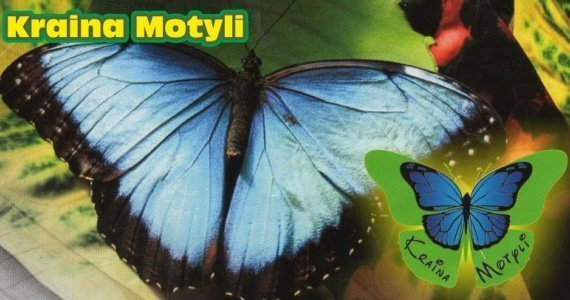 Motylarnia