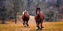 """U Prezesa"" Joanna and Ryszard Krzeszewscy's Mountain Horse Riding Resort - Chmiel"