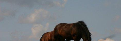 Karolina and Witold Smoleńscy's Hucul horse farm - Polana