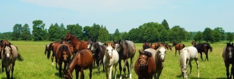 Hannover horse farm - DutkaKonie - Czarna Dolna