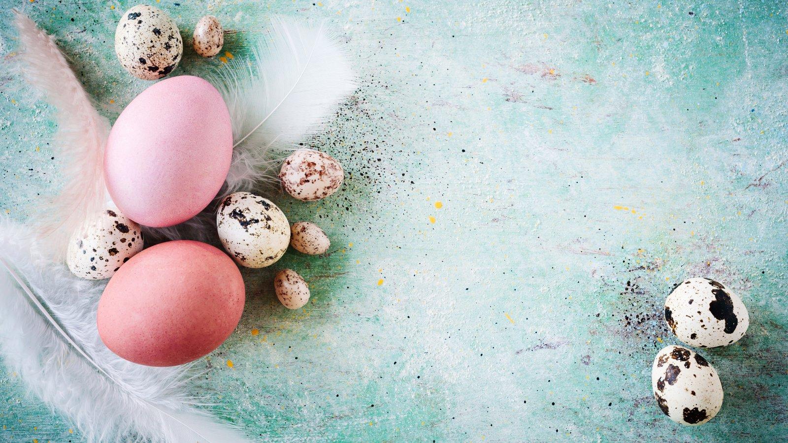 Pałucka Wielkanoc w Herbarium