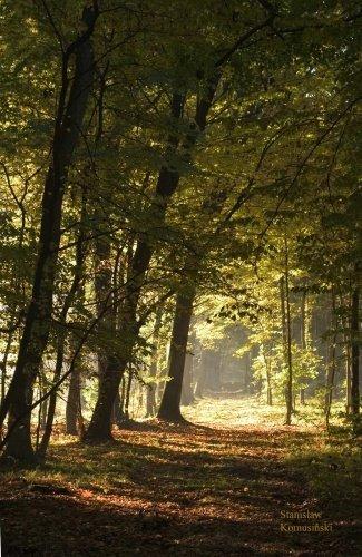 Jesien/Niepoomice1-s.jpg