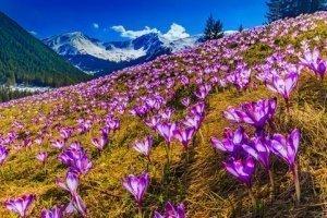 Wiosna pod Tatrami