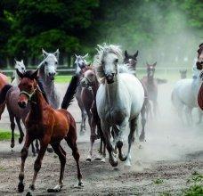 konie_1.jpg