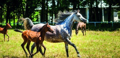 konie2.jpg