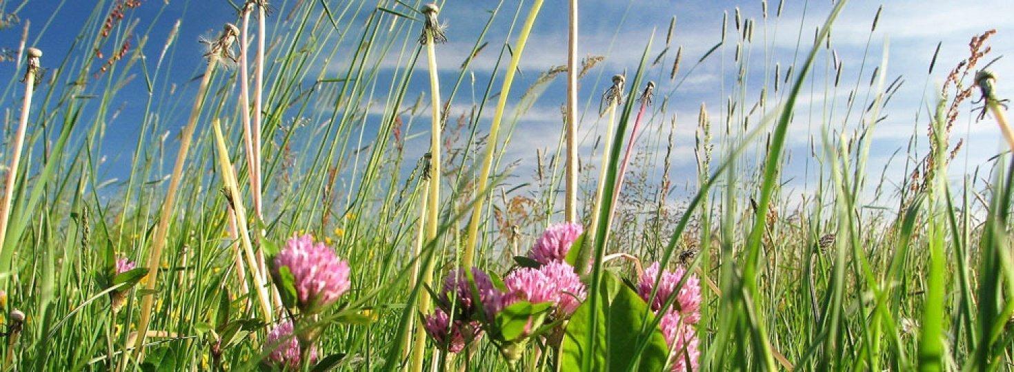 okolica/Meadow.jpg