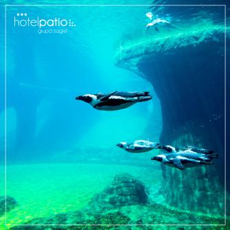 Podwodny świat we wrocławskim Zoo
