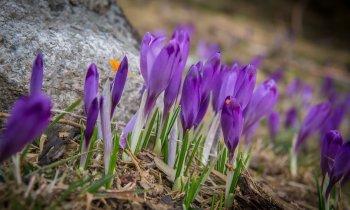 Wiosna pod Nosalem