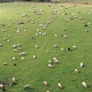 Kto ma owce, ten ma co chce!