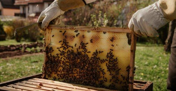 Miody i produkty pszczele