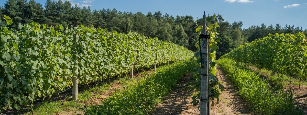Winnica Dwórzno – Mazowiecka Toskania