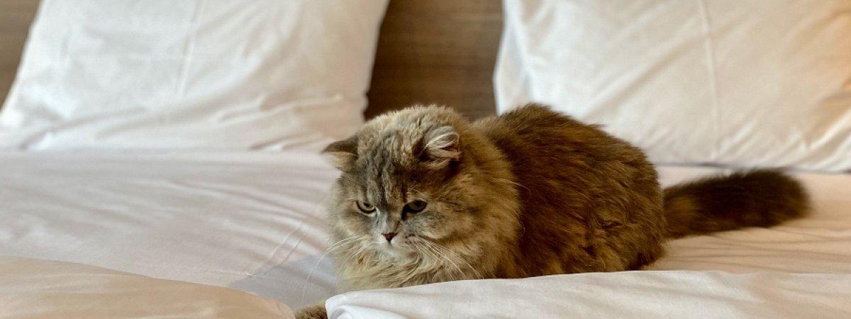 Wakacje z kotem. Co zrobić z kotem w czasie urlopu?