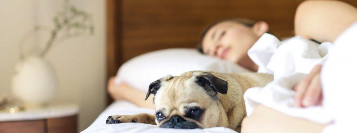 Zwierzęta w hotelu - udane wakacje z psem i kotem