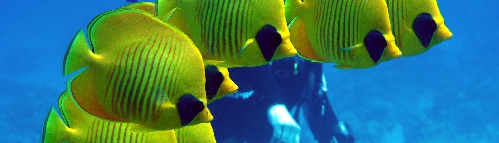Podwodny świat - spotkanie autorskie, prezentacja filmu