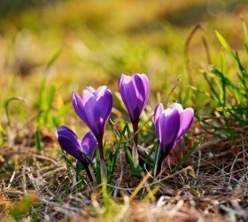 Wiosenna odnowa, czyli zadbajmy o siebie na wiosnę!