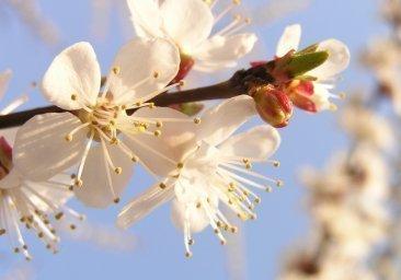 Już niedługo wiosna!