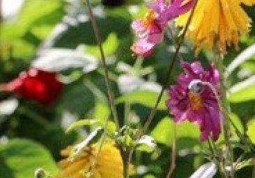 Kiermasz Ogrodniczy