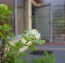 magnolia/P5298121.jpg