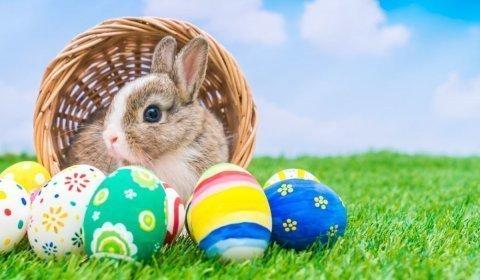 Wielkanoc w Bobrowej Dolinie