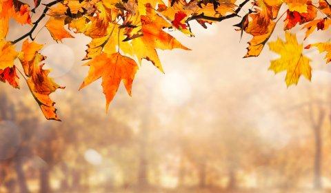 Jesień na Podlasiu