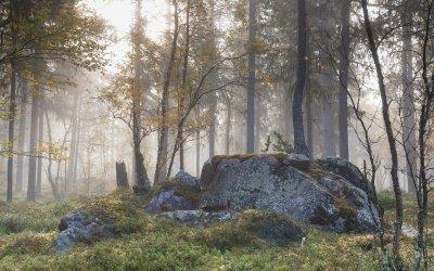 Rezerwat Kamienne Kręgi