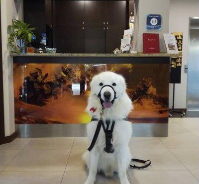 Hotel przyjazny zwierzętom