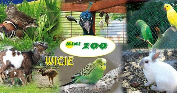 Mini-zoo in Wicie