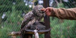 Park Ochrony Bieszczadzkiej Fauny
