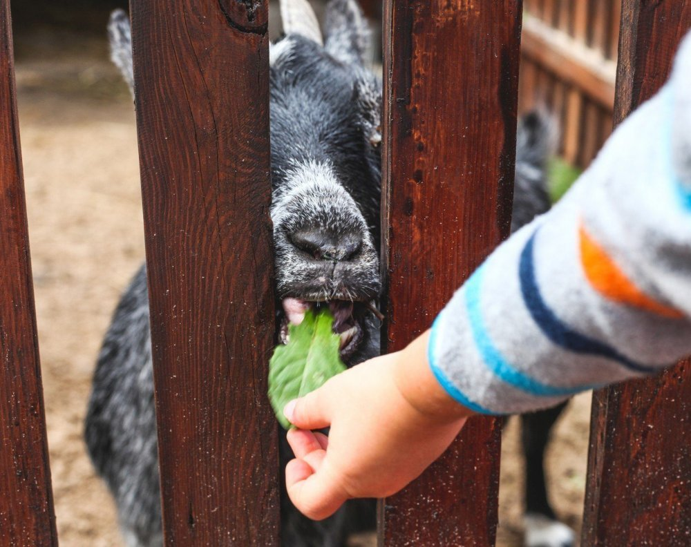 Feeding animals together brings so much joy