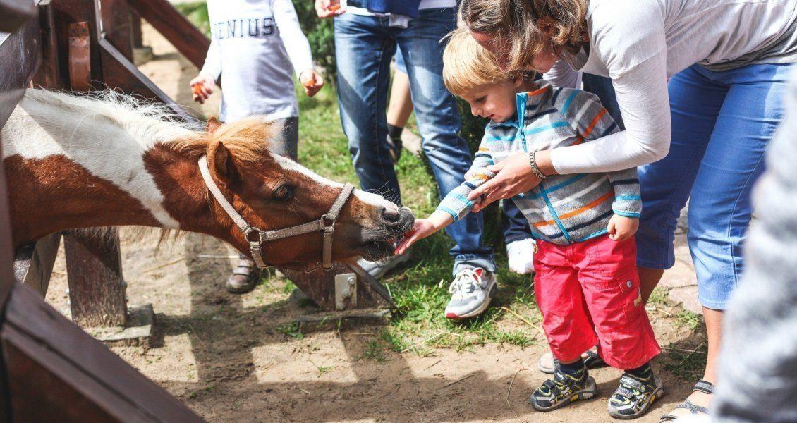 Hotel Ideal For Children Zalesie Mazury Active Spa