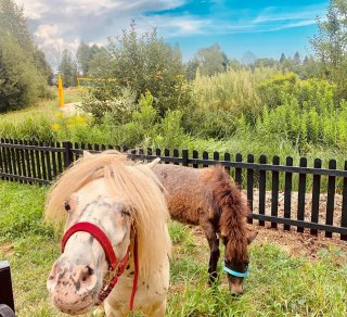 Kucyki Royal i Pony już w Bacówce!