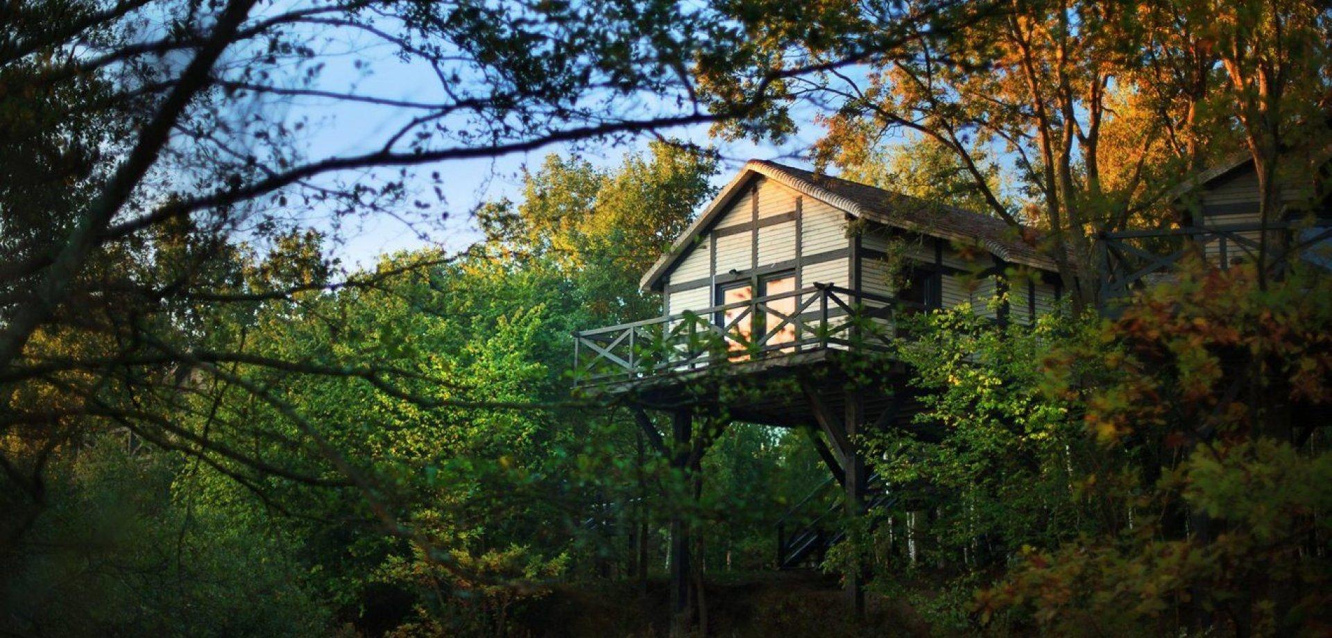 Poczuj magię lasu – zamieszkaj w domku na drzewie