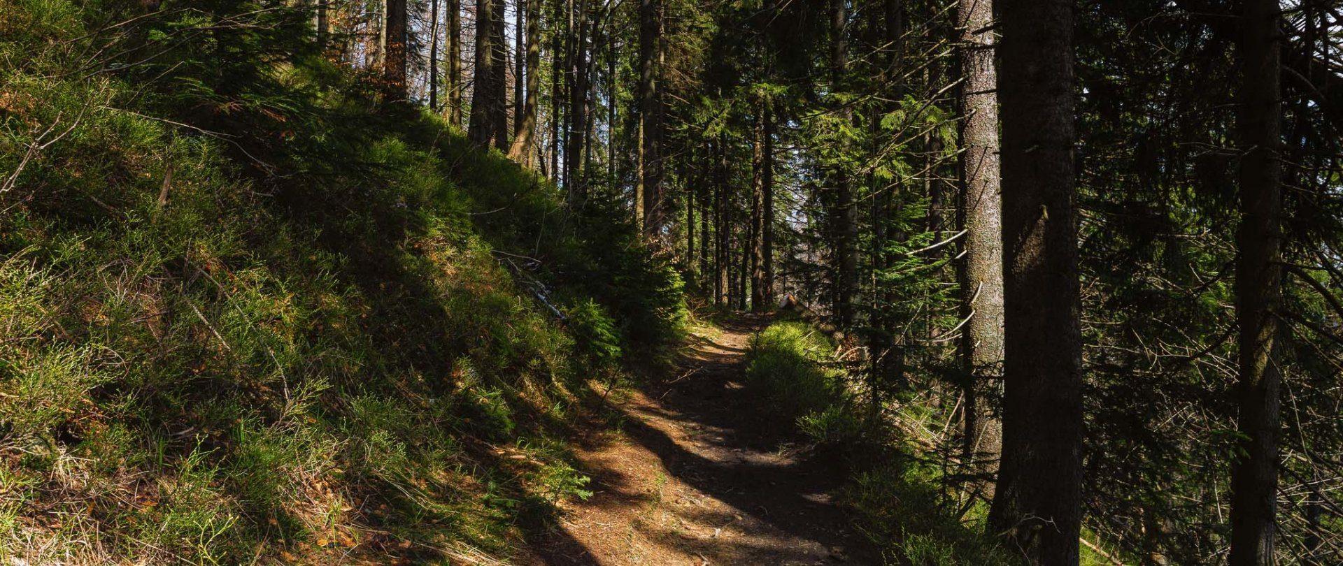 Wełcza Leśniczówka - Wełcza (Kawiarenka lub Dolinka)