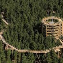 The path in the treetops of the Karkonosze