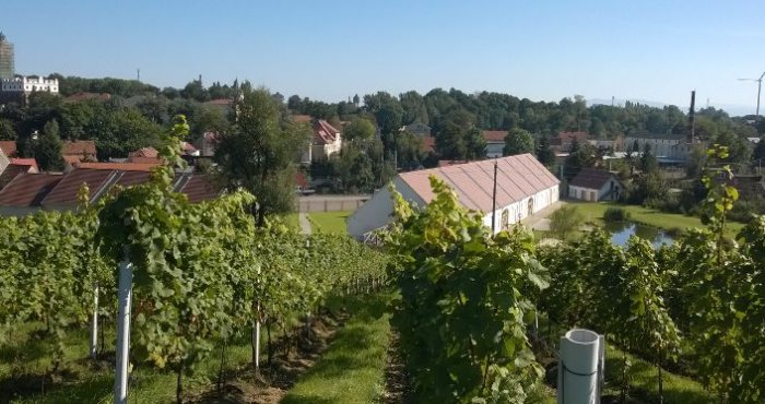 Winnica Hople w Paczkowie