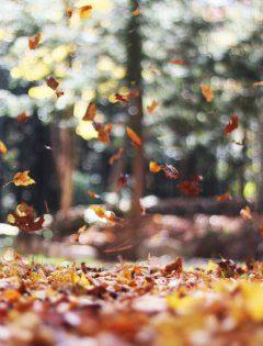 Jesień w Zakopanem