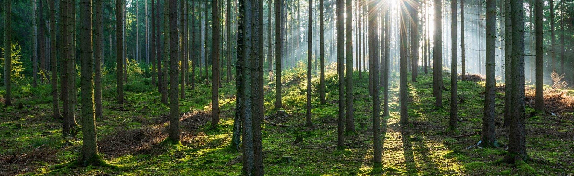 Lasy bukowe na liście Światowego Dziedzictwa Przyrodniczego UNESCO