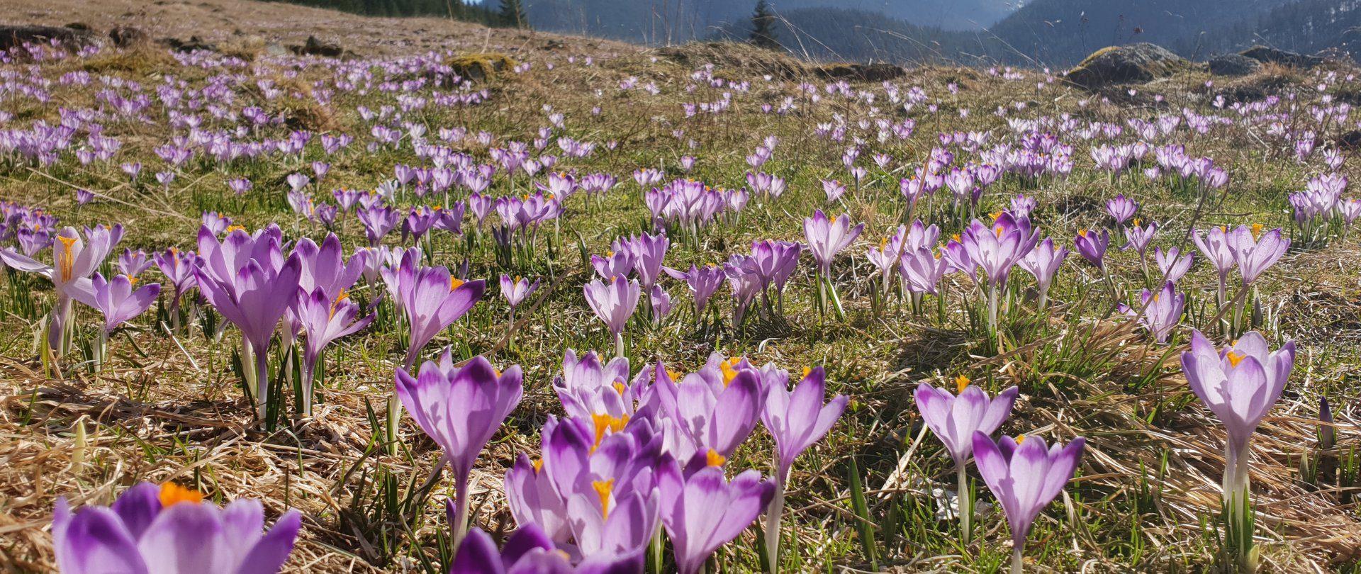 Spring in Bellamonte