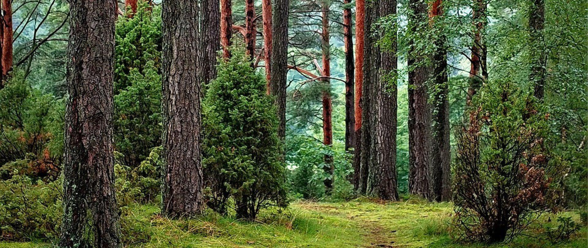 Forest treasures - Enjoy mushroom foraging