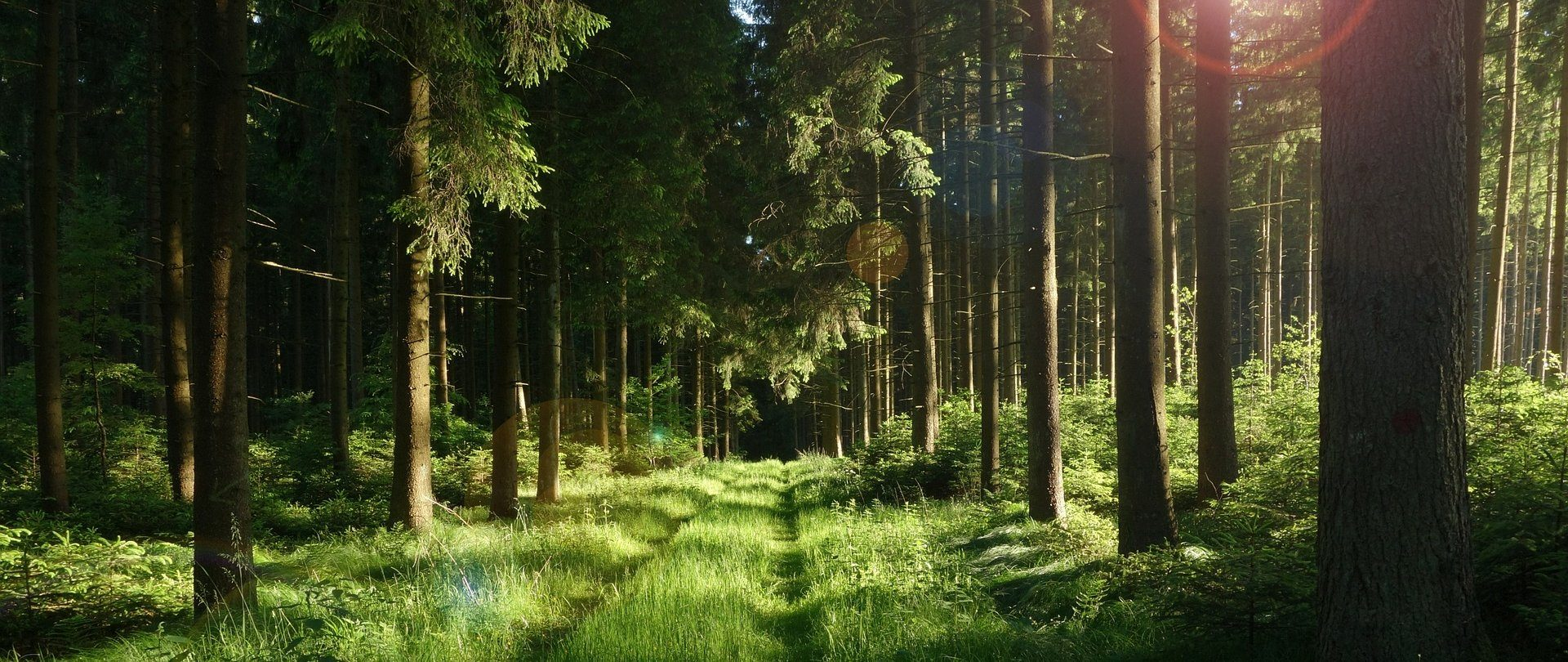 Hiking - Discover Bory Tucholskie step by step