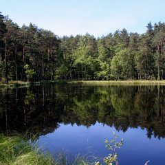 Bory Tucholskie National Park - Forest National Treasure