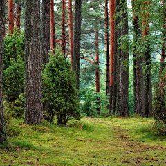 Waldschätze - Pilze sammeln