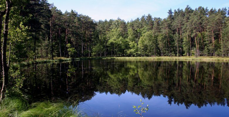 Bory Tucholskie National Park - a forest national treasure