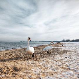Plaża Gdańsk zima