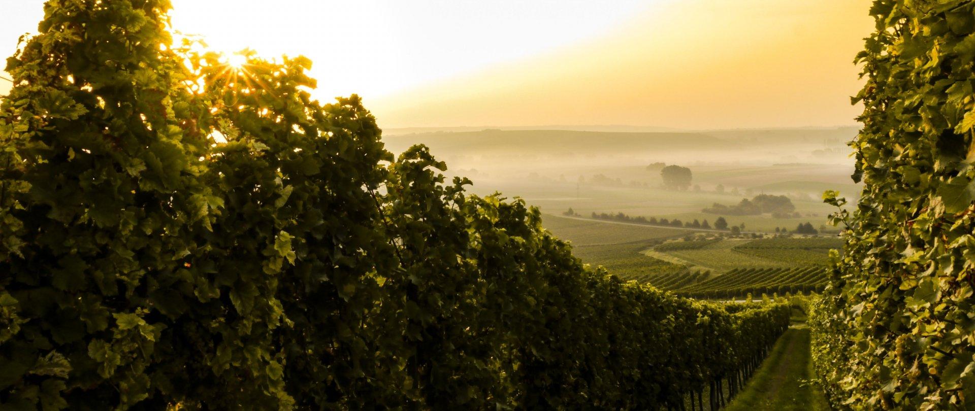 Kolacja truflowa z degustacją win, fotorelacja