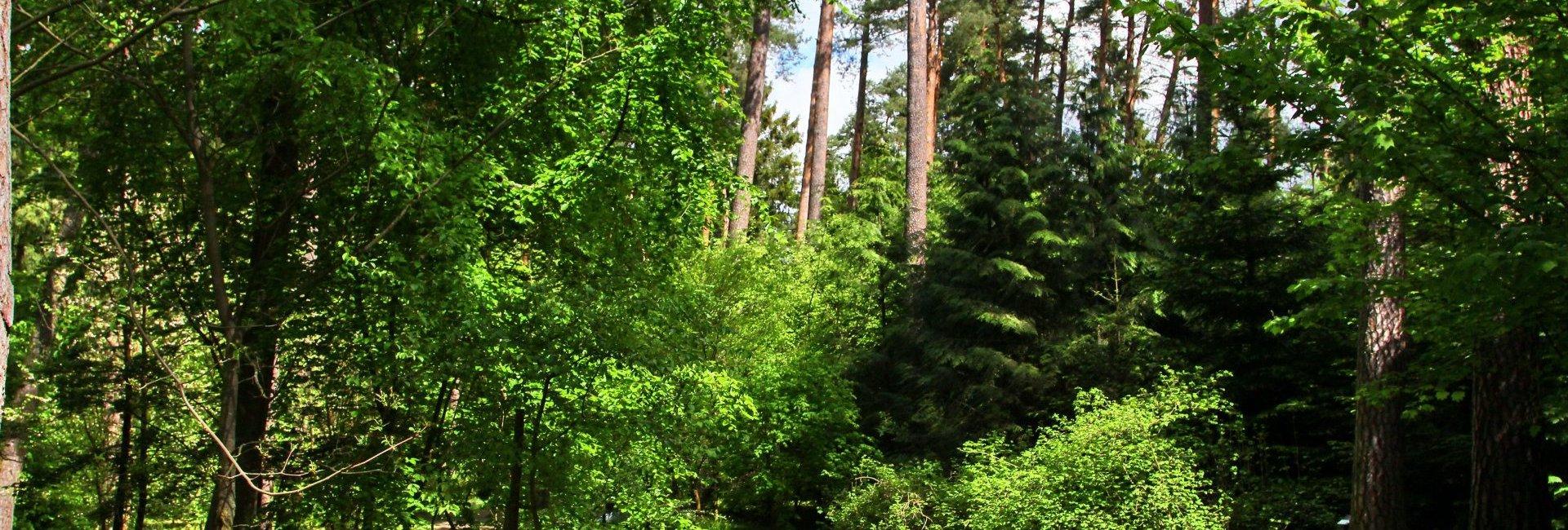 The forest arboretum of Warmia and Mazury in Kudypy (15 km od hotelu)