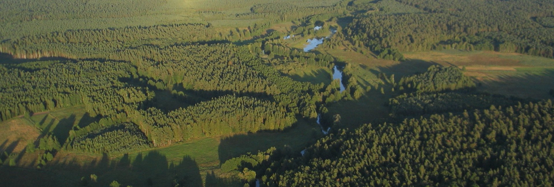 Taborskie Forests